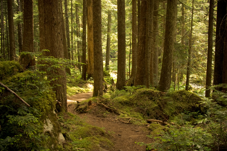 marmot-pass-forest-1