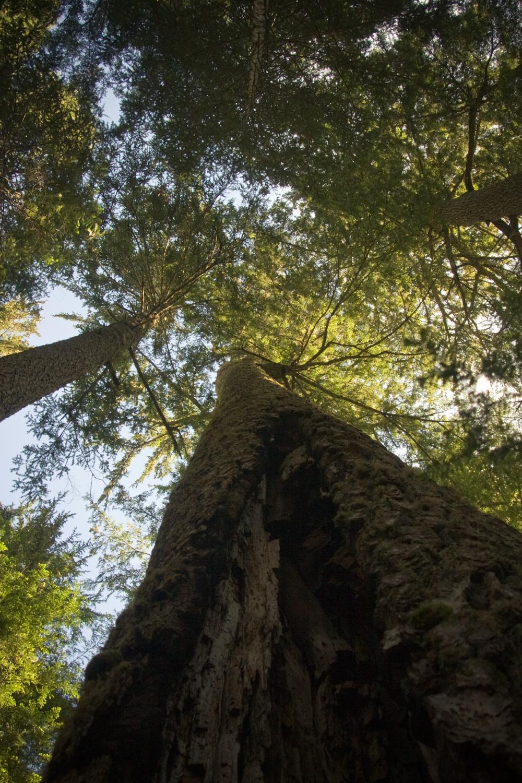 marmot-pass-tree-1