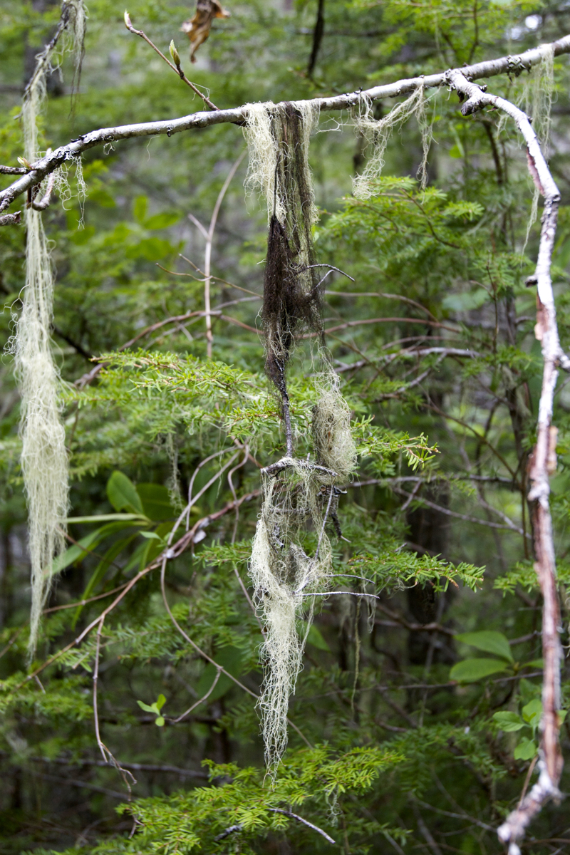 Interesting moss that was hanging on the trees everywhere