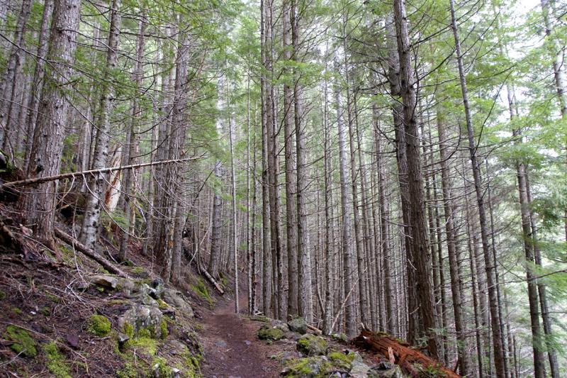 Tubal Cain Trail - 14
